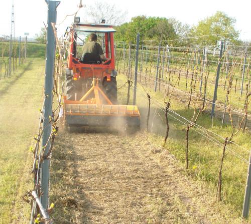 TL im Weinbau